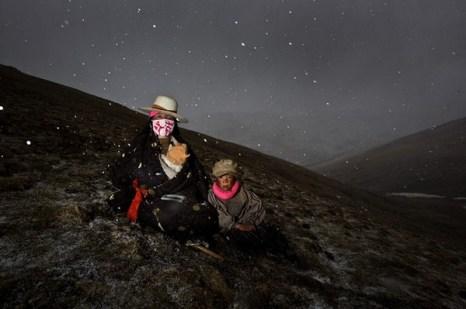 Начался снег и сборщикам кордицепса приходится спускаться с гор и пережидать непогоду. Фото с kanzhongguo.com