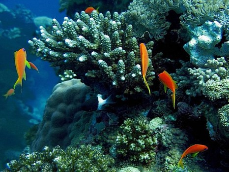 В Китае с большой скоростью гибнут коралловые рифы. Фото: HASSAN AMMAR/AFP/Getty Images