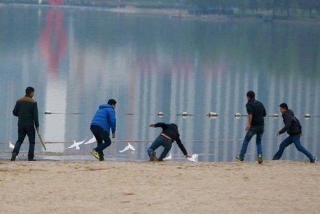 Горожане ловят белых свадебных голубей на закуску. Город Хэфэй. Ноябрь 2013 год. Фото с news.qq.com
