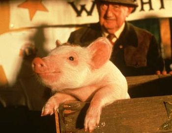 Кадр из фильма «Бэйб». Фото с сайта vokrug.tv