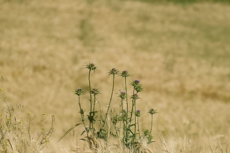 Колючее семейство. Фото: Хава Тор/Великая Эпоха (The Epoch Times)
