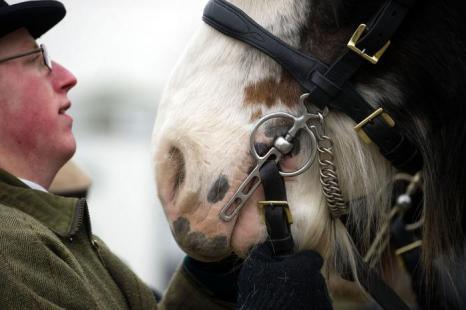 Парад упряжных лошадей прошёл в Лондоне. Фото: Bethany Clarke/Getty Images