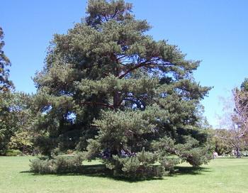 Волшебное дерево. Сказка. Фото: Екатерина Кравцова/Великая Эпоха