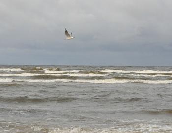 Море. Фото: Николай Богатырёв