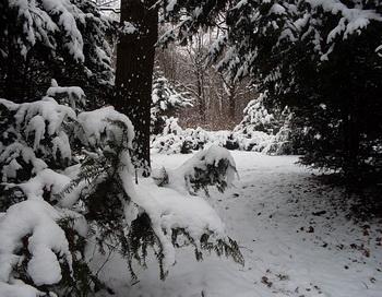 Зимний лес. Фото: Николай Богатырёв