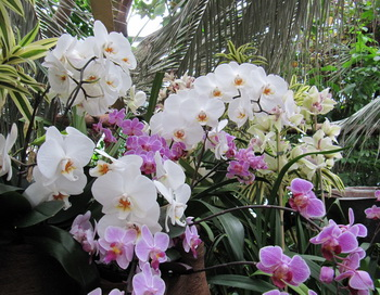 Орхидеи. Фото: Николай Богатырёв
