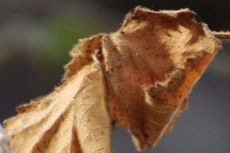 Неспешно усыхает стебелек, Фото: Хава Тор/Великая Эпоха (The Epoch Times)