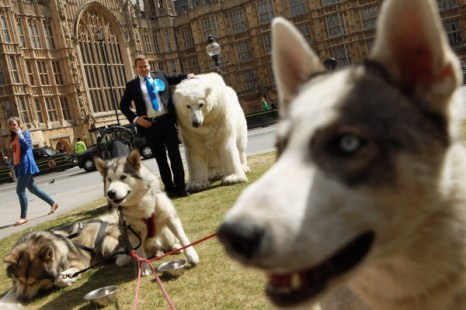 Фоторепортаж  о фотосессии «Гринпис»  премьер-министра Великобритании Дэвида Кэмерона. Фото: Oli Scarff/Getty Images