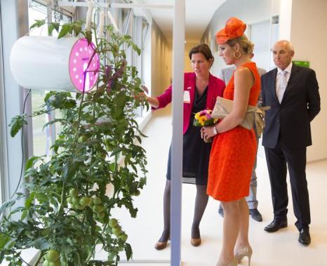 Королева Нидерландов Максима прибыла на открытие учебного года в Вагенингенский университет 2 сентября 2013 года. Фото: Michel Porro/Getty Images