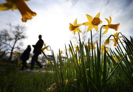 В начале марта в столице Великобритании на зелёных полях парка Ноттинг-Хилл распустились первые весенние цветы.  Природа начала оживать после суровой зимы. В Фото: Oli Scarff/Getty Images