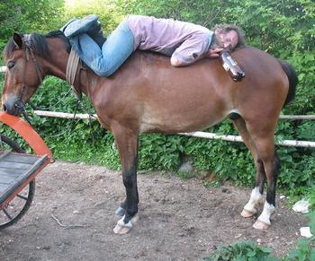 В Колорадо запрещено ездить пьяным не только за рулём, но и на лошади. Фото с сайта forum.sevastopol.info