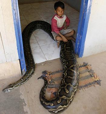 Дружба со змеями — далеко не единичный случай в нашем мире. Фото с сайта forum.huyandex.com