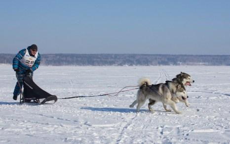 Гонки на собачьих упряжках. Фото: Сергей Кузьмин/Великая Эпоха (The Epoch Times)