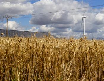 Цены на зерно стремительно растут. Фото: JOEL SAGET/AFP/GettyImages