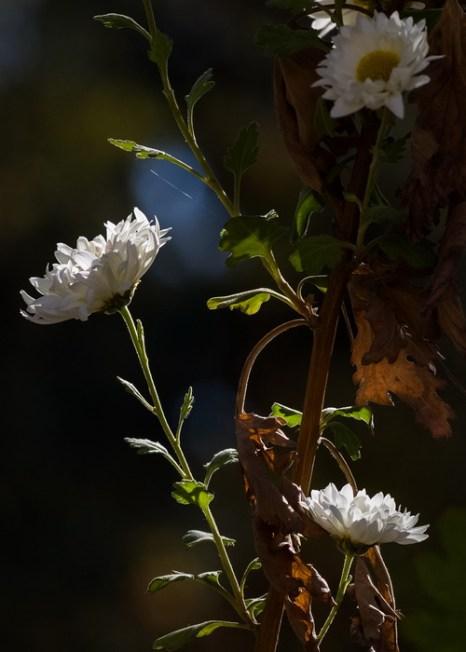 Сад, где покой. Фото: Хава Тор/Великая Эпоха (The Epoch Times)