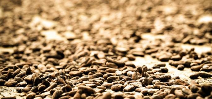 Все ключевые эффекты шоколада можно отнести на счёт его главного ингредиента – какао. Фото: EVARISTO SA/AFP/Getty Images
