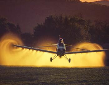 Не существует безопасного уровня воздействия раундапа на генетически модифицированные организмы. Фото: John Zoiner/ Getty Images