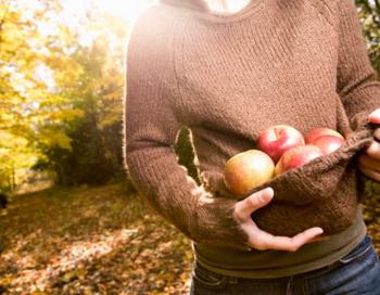 Каждое съеденное яблоко отдаляет нас от врача. Фото: Hugh Whitaker/Cultura RM/Getty Images