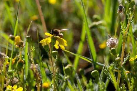 Пчела. Фото: Хава ТОР/Великая Эпоха (The Epoch Times)