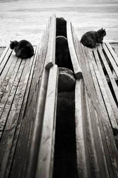 «Размолвка», Ирина Покровская, г. Симферополь.Фото: fotosalonsevast.ucoz.ru