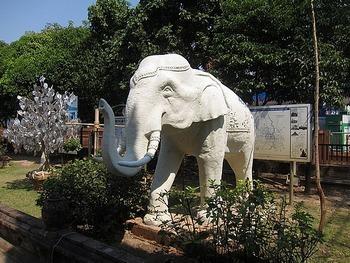Белый слон. Тайланд. Фото с сайта blog.travelpod.com
