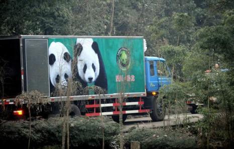 Гигантские панды (Tuan Tuan) и (Yuan Yuan). Фото:  SAM YEH/AFP/Getty Images