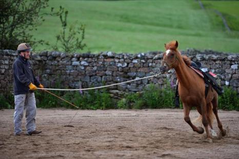 Хозяйство  HorseBack в Великобритании. Фоторепортаж. Фото: Jeff J Mitchell/Getty Images