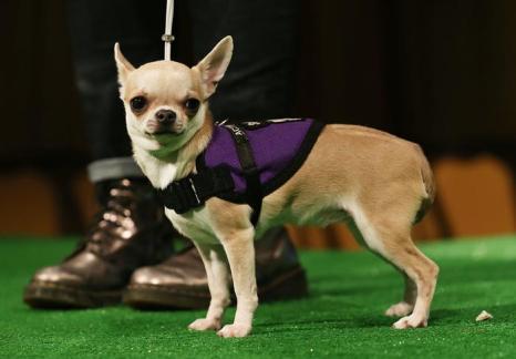Собаки на показе. Фото: Mario Tama/Getty Image