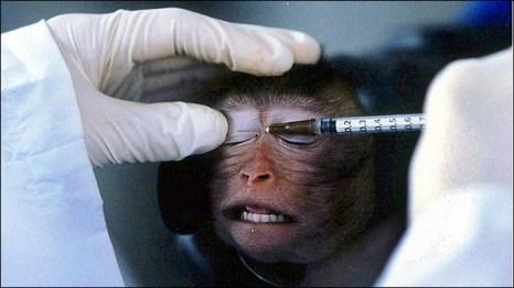 Почему компания Avon вернулась к экспериментам над животными? Фото с amic.ru