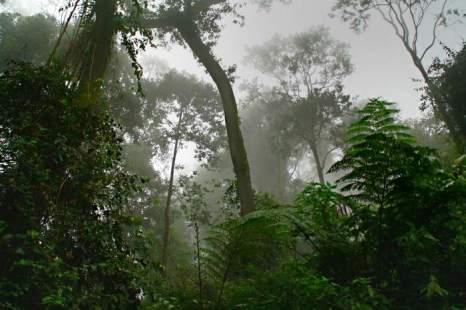 Среди облаков по дороге к вулкану. Остров Ява, Индонезия. Фото: Сима Петрова/Великая Эпоха (The Epoch Times)