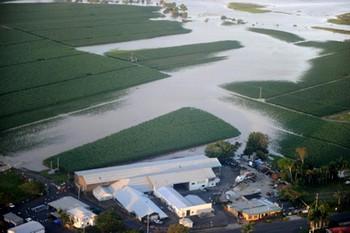30 декабря 2010 г. были затоплены поля сахарного тростника около Бундеберга в Квинсленде. Ожидается, что цены на сахар возрастут после удара циклона «Яси», который привел к потере сахарного тростника на полях Австралии, и причинил общий ущерб, оцениваемый в 505 миллионов долларов. Фото: Torsten Blackwood /Getty Images