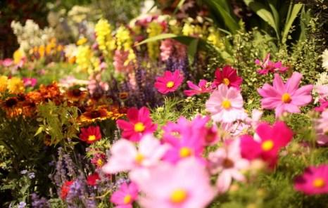 Дарите женщинам цветы, Фото: Getty Images