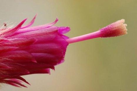 Яркие цветы в парках Торонто. Фото: Сил Либар/Великая Эпоха