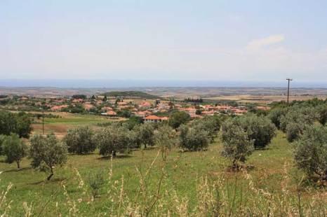Ухоженные оливковые деревья. Фото: Сима Петрова/Великая Эпоха