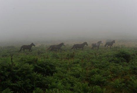 Дикие лошади пасутся на холмах выше деревни Sabucedo, Испания. Фото: Denis Deule/Getty Images