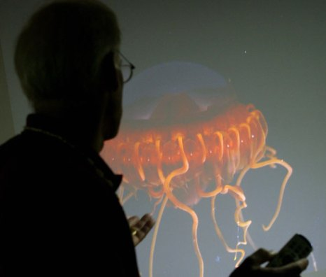 Медуза – примитивное, но опасное существо. Фото: MARK RALSTON/AFP/Getty Images