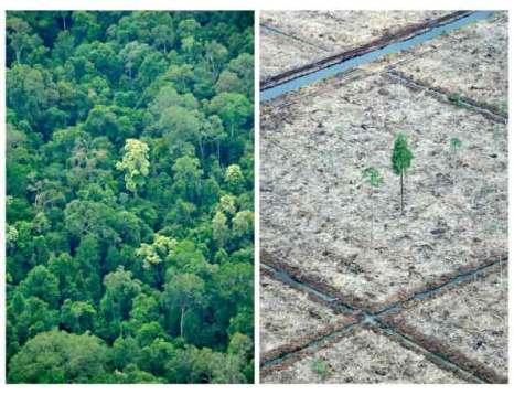Аэрофотосъемки Гринпис показывают область тропического леса Сангэя Сембилэнга Нэйшнэл Парка (L) на острове Суматры в результате уничтожения тропических лесов и торфяников. Фото: РОМЕО GACAD/AFP/Getty Images