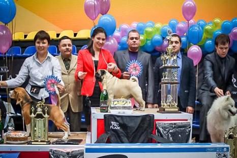 Выставка собак состоялась в Нижнем Тагиле. Фото: Андрей Толмачёв/Великая Эпоха (The Epoch Times)