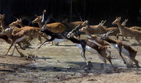 Наводнение угрожают дикой природе в Сафари-парка. Фото: Paula Bronstein /Getty Images