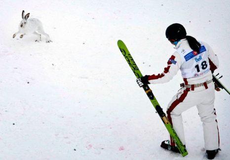 Зимой не до скуки. Кристалл Ли пытается прогнать зайца, выбежавшего на лыжню, во время соревнования по прыжкам с трамплина в Калгари 29 января. Фото: AP Photo/The Canadian Press/Jeff McIntosh