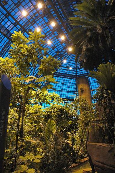 Ночное настроение в большой тропической оранжерее Фото: © I. Haas, Botanischer Garten und Botanisches Museum Berlin-Dahlem