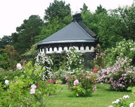 Розы вокруг павильона  еще заставляют себя подождать. Фото: © I. Haas, Botanischer Garten und Botanisches Museum Berlin-Dahlem