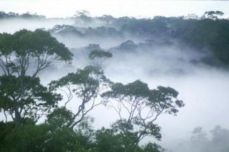 Утренний туман поднимается над тропическими джунглями Амазонки. Фото: William Laurance