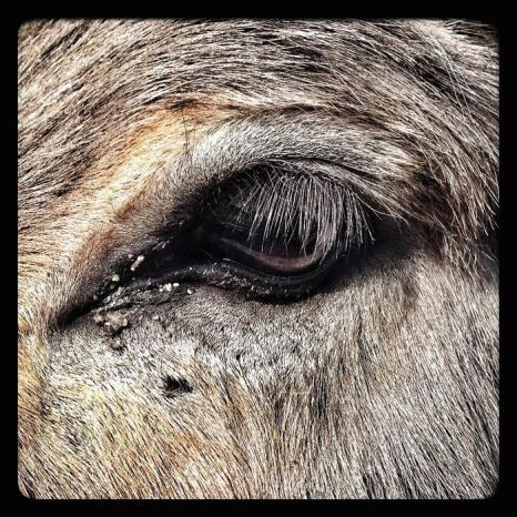 Глаз осла в зоопарке Хагенбек (Германия). Фото: Joern Pollex/Getty Images