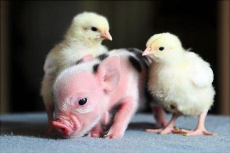 Какой ты в пятнышках! Фото с сайта animalworld.com.ua