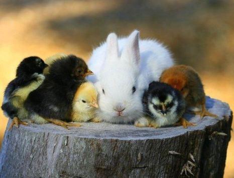 Мама, возьми нас под крыло… Фото с сайта animalworld.com.ua