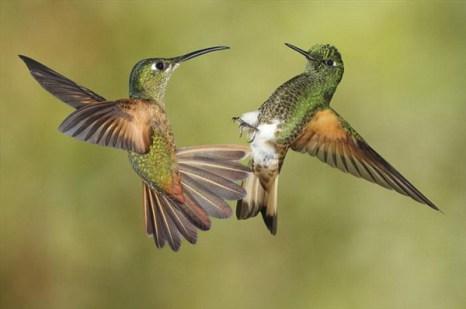 Медовички из Эквадора. Фото с сайта new.ba-bamail.co.il