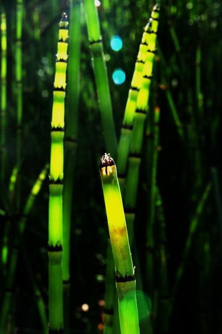 Растения ловят солнце..., а камера их вместе. Фото: Хава Тор/Великая Эпоха (The Epoch Times)