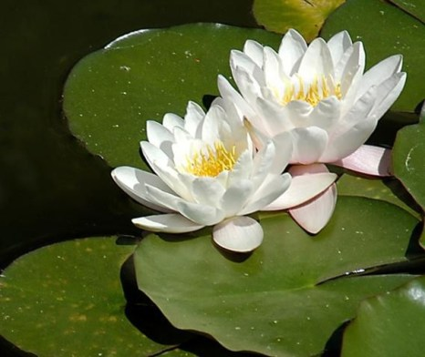 Цветы прекрасны и слова не нужны. Фото: xaxor.com