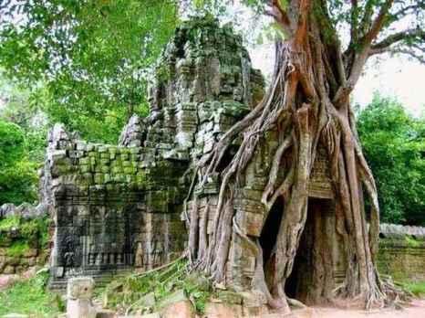 Энергия деревьев. Фото:xaxor.com